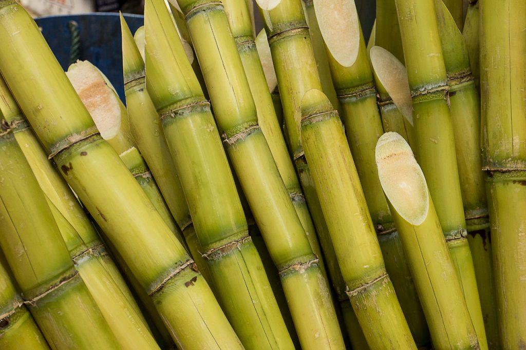 Cana de açúcar, matéria prima do Plástico Verde